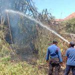 Barongan Dekat Rumah Warga Kota Probolinggo Terbakar, Satu Damkar Diterjunkan