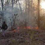 Hutan Jati 5,5 Hektare di Taman Nasional Baluran Situbondo Terbakar