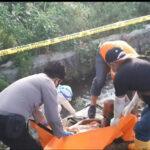 Tengkulak Mangga Alpukat di Pasuruan, Tewas Terjatuh dari Pohon