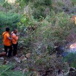 Lagi, Dua Kawasan Hutan Jati di Situbondo Terbakar
