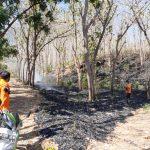 Hutan Jati Pasir Putih Situbondo Kembali Terbakar, 1 Hektare Ludes