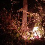 Lagi, Hutan Jati Seluas 3 Hektare di Bungatan Situbondo Terbakar