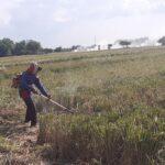 Petani di Mojokerto Keluhkan Kelangkaan Pupuk Subsidi