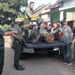 Polhut Jember Tangkap Pelaku Pembalakan Liar 17 Batang Pohon Sonokeling