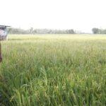 Sulit Dapat Pupuk Subsidi, Petani di Ngawi Terpaksa Beli Pupuk Non Subsidi