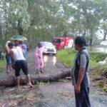 Hujan Deras Disertai Angin Tumbangkan Pohon Besar di Jalan Doko Blitar