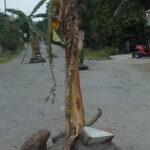 Tak Kunjung Diperbaiki, Warga Karangrejo Blitar Tanam Pisang Lagi di Jalan Rusak