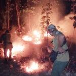 Lagi, Hutan Jati Taman Nasional Baluran Situbondo Terbakar