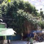 Hii..Ada Hantu Cantik Penunggu Beringin Tua di Sukomanunggal Surabaya