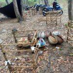 Judi Sabung Ayam di Sumenep Digerebek Polisi, Penjudi Berhamburan Lari ke Hutan