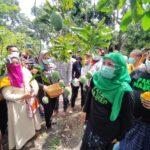 Panen Mangga Alpukat di Pasuruan, Gubernur Khofifah Janji Perluas Ekspor