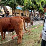 Pencurian Sapi di Jombang, Pemilik : Alhamdulillah Bisa Ketemu
