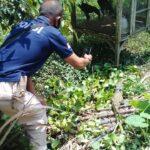 Mancing di Sungai Sugih, Warga Blitar Temukan Anak Buaya