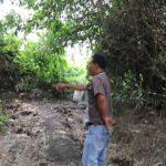 Heboh, 6 Ekor Sapi Milik Warga Satu RT di Jombang Hilang Dicuri