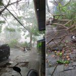 Diterjang Hujan dan Angin, Satu Pohon di Tulungagung Roboh Menimpa Sepeda Motor