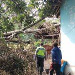 Pohon Wadang Tiba-Tiba Tumbang, Satu Rumah Warga Doko Blitar Rusak