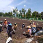 Para Petani di Nganjuk Jadi Sasaran Sosialisasi Prokes