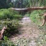 Pohon Tumbang Akses Menuju Pendakian Gunung Semeru Sempat Tertutup