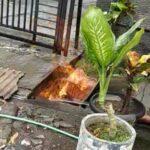 Diduga Pipa Gas Bocor, Api Muncul dari Selokan di Mojokerto