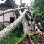 Puting Beliung di Blitar, 4 Rumah Rusak Tertimpa Pohon Tumbang