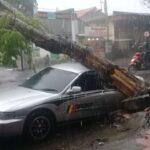 Pohon Angsana Tumbang Timpa Mobil Sedan dan Truk di Mojokerto
