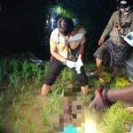 Jebakan Tikus Berlistrik di Ngawi Kembali Memakan Korban