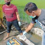 Lagi-lagi, Petani di Ngawi Tewas Tersetrum Jebakan Tikus