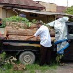 Polisi Amankan Pikap Bermuatan 5 Gelondong Kayu Jati Ilegal di Situbondo