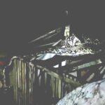 Ular Piton 3 Meter di Kandang Ayam Warga Jember Diamankan Petugas Damkar