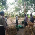 Lagi, Penggerebekan Judi Sabung Ayam di Situbondo Bocor Polisi Hanya Amankan Kurungan