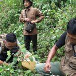 BKSDA Tambah 4 Kamera Pengintai Harimau Jawa di Tulungagung