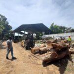 Wacana Penjualan Pohon Sono Keling, Bupati Tulungagung: Tunggu Kajian