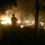 Kandang Terbakar, 1.800 Anak Ayam di Tulungagung Hangus