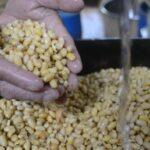 Harga Kedelai Meroket, Tempe di Pasar Krukah Surabaya Menghilang
