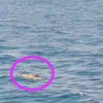 Kapal Asal Papua Temukan Mayat Mengambang di Perairan Giligenting Sumenep