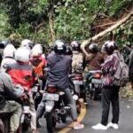 Pohon Tumbang dan Longsor di Gumitir Jember, Lalin Macet