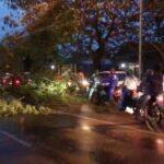 Diterjang Hujan Angin, Sejumlah Pohon dan Tiang Listrik di Mojokerto Roboh
