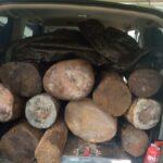 Angkut 11 Gelondong Kayu Diduga Ilegal, Mobil Operasional Desa Kayumas Situbondo Ditangkap