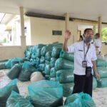 Petani Situbondo Manfaatkan Tanaman Sorgum untuk Pakan Ternak