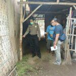 Curwan di Situbondo Marak, Dalam Semalam 5 Sapi Limousin Diembat Maling