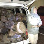 Kasus Mobil Operasional Desa di Situbondo Muat Kayu Ilegal, Kades Berkilah Tak Tahu