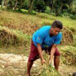 Petani Jember Sambatkan Rencana Pemerintah Mengimpor Beras