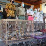 Ratusan Burung dan Kura-kura Selundupan Terbongkar di Tanjung Perak Surabaya
