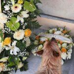 Kisah Haru Seekor Anjing Menemukan Makam Tuannya dan Menziarahi Setiap Hari
