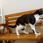 Kafe Kucing, Tempat Relaksasi Bersama Hewan Kesayangan