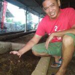 Manfaatkan Feses Sapi untuk Budidaya Cacing, Pria Banyuwangi Ini Raup Rp 5 Juta/Bulan
