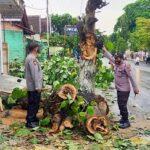 Tiga Pohon Saman di Blitar Tumbang Timpa Rumah Warga