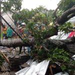 Hujan Angin, Pohon dan Papan Reklame di Tulungagung Ambruk