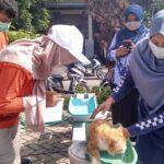 Posyandu Kucing di Lamongan; Antisipasi Persebaran Penyakit dari Binatang Piaraan