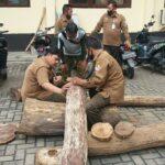 Dalami Pencurian 11 Gelondong Sonokeling, Polres Situbondo Panggil 3 Petugas Perhutani